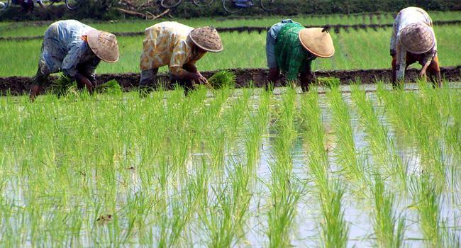 Sektor Pertanian I Perdagangan Bebas Batasi Peran Negara Memperkuat Petani Lokal