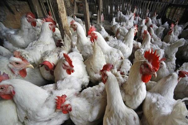 Keputusan Appelate Body WTO Ancam Kedaulatan Pangan RI