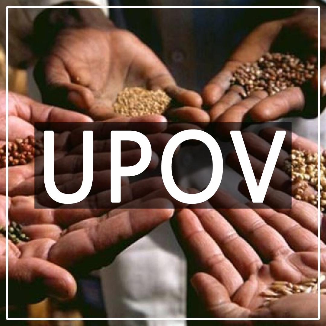 UPOV 1991 Dalam Konteks Perjanjian Perdagangan Bebas