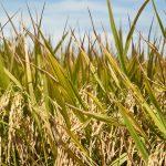 Tunda Pengesahan RUU Sistem Budidaya Pertanian Berkelanjutan Yang Menjerat Petani